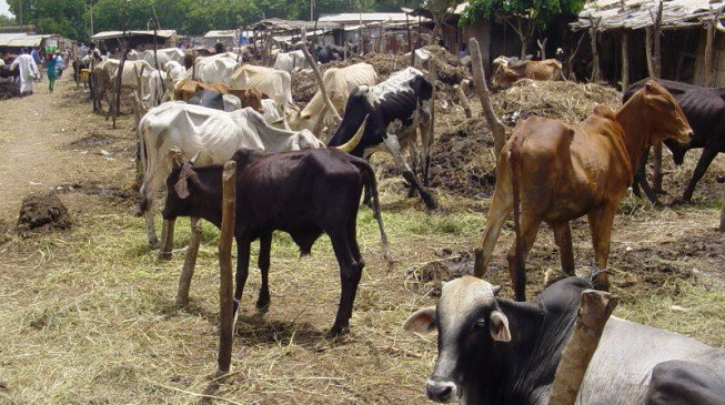 cattle-market-653x365