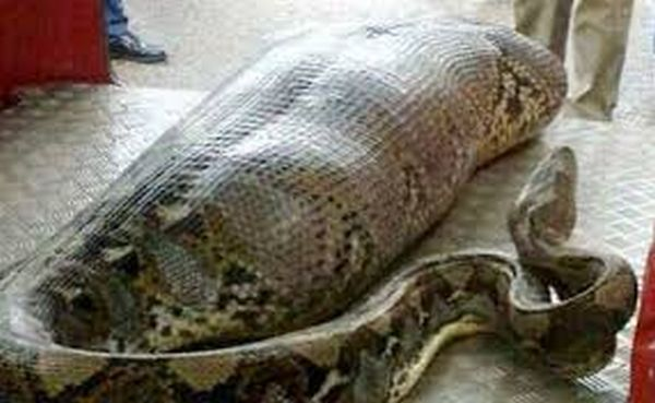Snake With JAMB Money