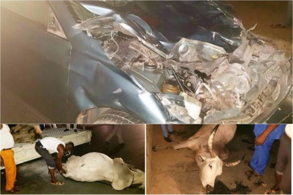 cows-cause-a-ghastly-motor-accident-in-rivers-state-photos-lailasnews-600x400