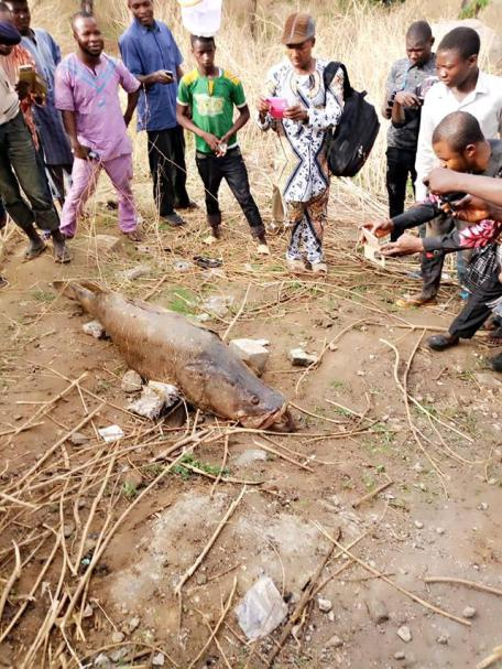 Dead Fish Found In Abuja