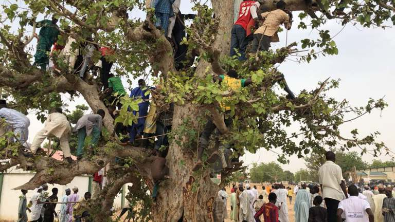 Laziness Youths Climb tree to see Buhari