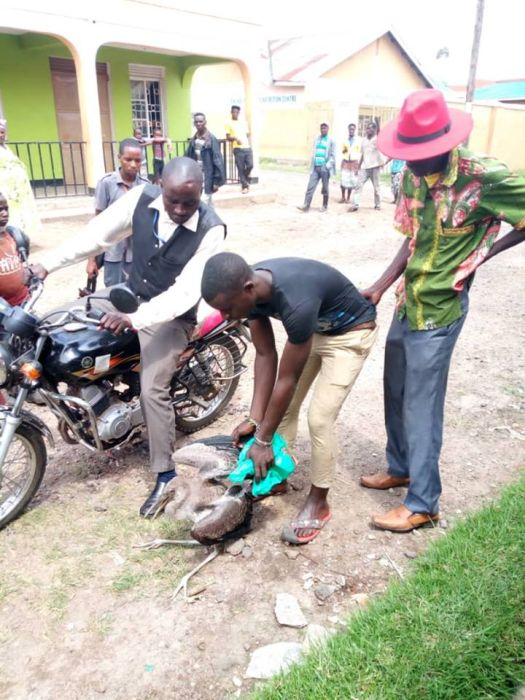 Evil Bird Man Arrested By Police After Catching Bird As It's Linked To Witchcraft (Photos)